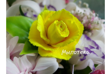 Роза чайная Желтая
