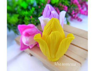 Бутон тюльпана 60