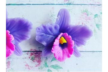 Орхидея малая