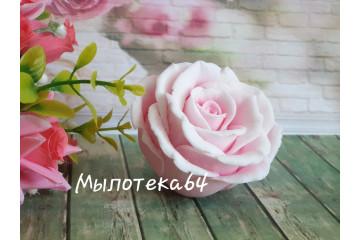 Роза Ольга большая