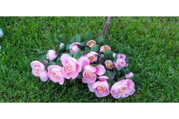 Ветка ранункулюсов  розовая