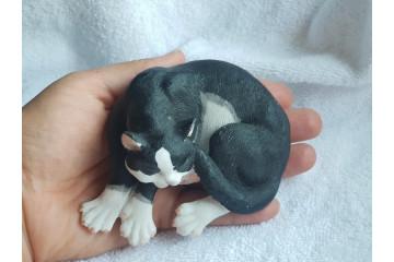Котик черно-белый
